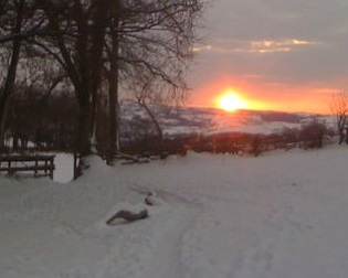 Alpaca-made track in snow, west Wales smallholding